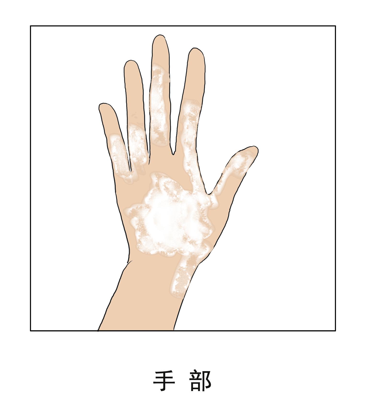 手部.jpg