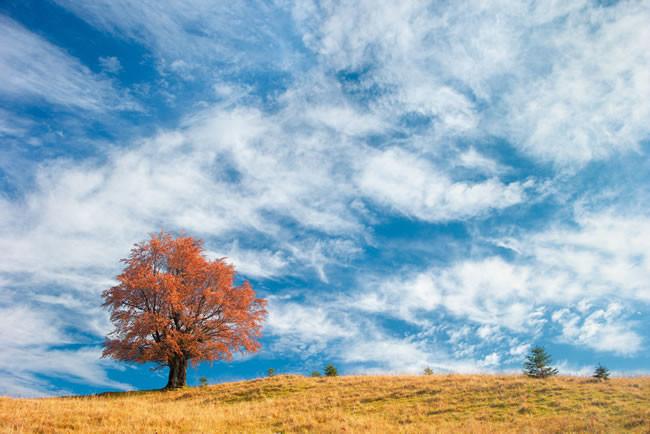 生活中白癜风患者需要注意什么